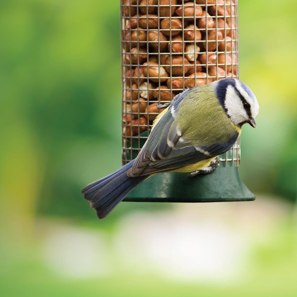 Walter Harrison's | Wild Bird Feeds, Feeders and Accessories